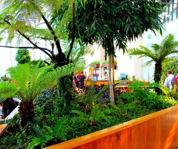 Bar proche des plantes de la serre de Sky garden